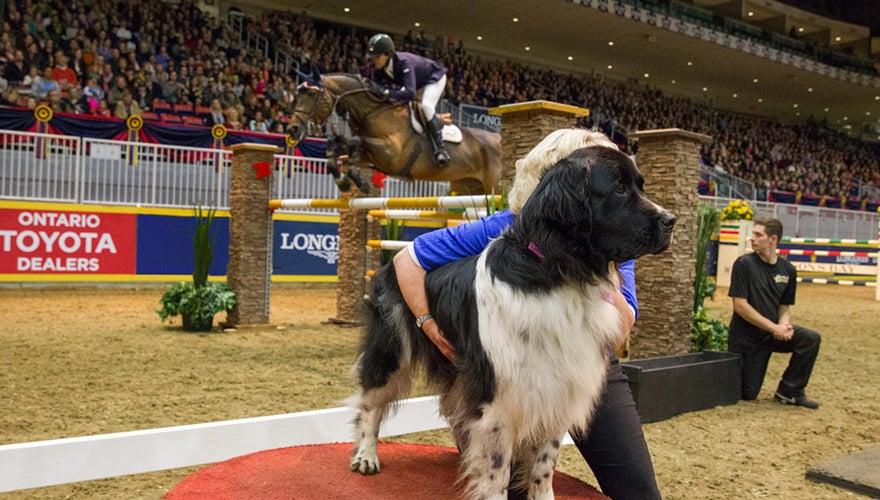Canine/Equine International Jumper Challenge